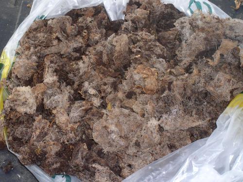 non-compostable teabag remains